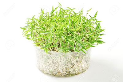 Remove Mildew With Green Bean Sprouts